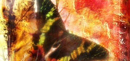 Among Butterflies