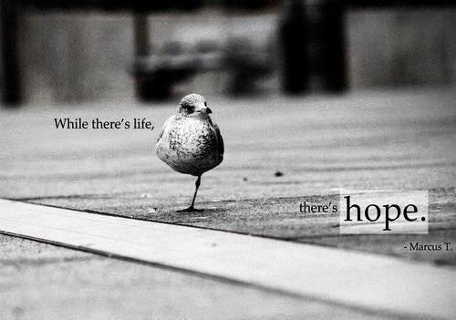 """""""While there's life, there's hope."""" Cicero"""